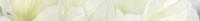 Rapsodia olive border 01 6,5x60 см